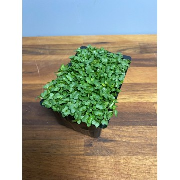 Punnet of cress
