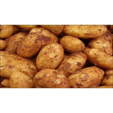 Cyprus Potatoes per kilo