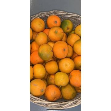 Marmalade Oranges (per kilo)